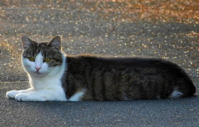 Oznámení o odchytu koček