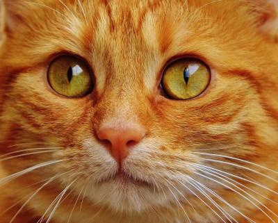 Umisťovací výstava koček