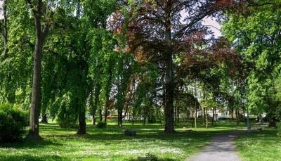 Netopýři v Nolčově parku