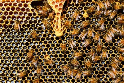 """Sdělení pro chovatele včel ve věci """"Zrušení oznámení umístění včelstev na obecní úřady"""""""