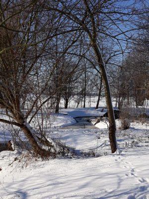 Zasněžené meandry potoka