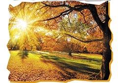 PODZIMNÍ ZAHRADA – ZVE VÁS KOMISE KULTURY A ZAHRANIČNÍ SPOLUPRÁCE RMČ PRAHA 20