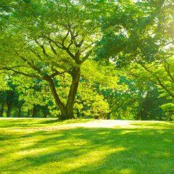 100 stromků vysázeno v háječku Prachovská