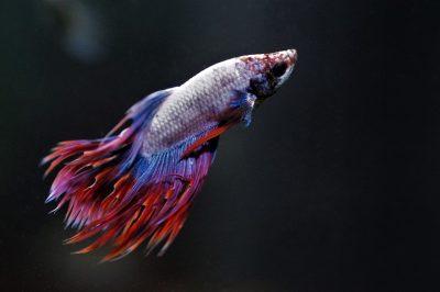 Burza rybiček – prodejní trhy akvarijních ryb